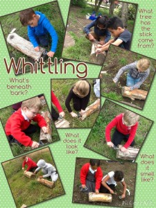 This week we used tools at forest school. The peeler was very useful to whittle away at sticks around our forest area...